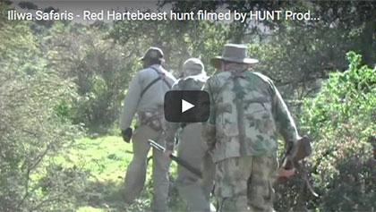 Red Hartebeest 2011